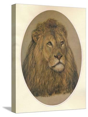 Lions Head, c1896-Frank Paton-Stretched Canvas Print