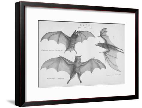 Bats. (Chiroptera), 1885--Framed Art Print