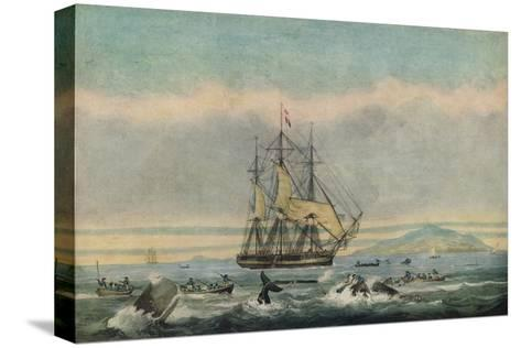 South Sea Whale Fishery, 1825-Thomas Sutherland-Stretched Canvas Print