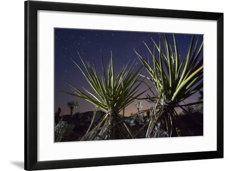 Mojave Yuccas Frame a Distant Joshua Tree in Joshua Tree National Park-Keith Ladzinski-Framed Art Print