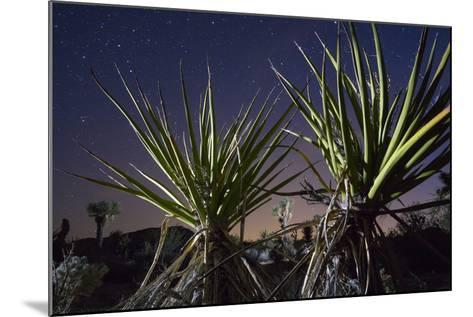 Mojave Yuccas Frame a Distant Joshua Tree in Joshua Tree National Park-Keith Ladzinski-Mounted Photographic Print
