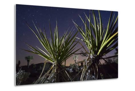 Mojave Yuccas Frame a Distant Joshua Tree in Joshua Tree National Park-Keith Ladzinski-Metal Print