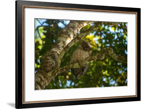 A Brown Fish Owl, Bubo Zeylonensis, Perches on a Tree Branch-Prasenjeet Yadav-Framed Art Print
