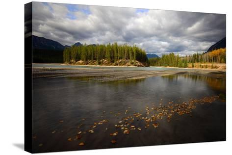 Autumn Leaves Floating on Athabasca River in Alberta, Canada-Raul Touzon-Stretched Canvas Print