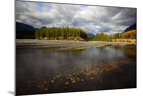 Autumn Leaves Floating on Athabasca River in Alberta, Canada-Raul Touzon-Mounted Photographic Print