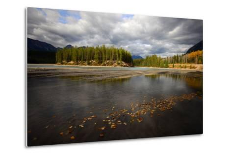 Autumn Leaves Floating on Athabasca River in Alberta, Canada-Raul Touzon-Metal Print