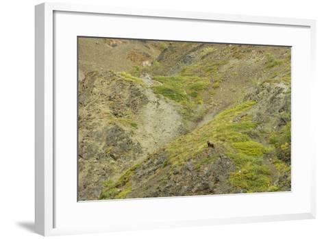 Aerial View of a Distant Grizzly Bear on Green, Rocky Terrain-Barrett Hedges-Framed Art Print