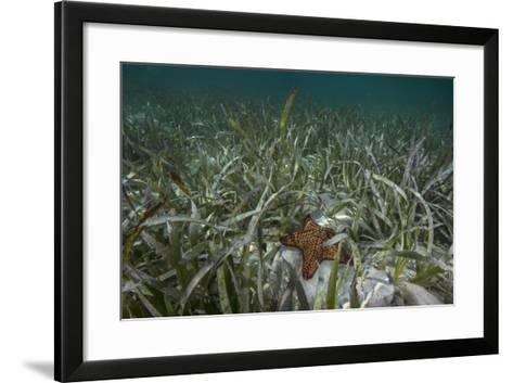 A Sea Star in Seagrass Beds in Gardens of the Queen-David Doubilet-Framed Art Print