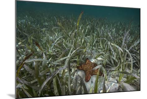 A Sea Star in Seagrass Beds in Gardens of the Queen-David Doubilet-Mounted Photographic Print