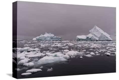 Icebergs in Portal Point, Antarctica-Sergio Pitamitz-Stretched Canvas Print
