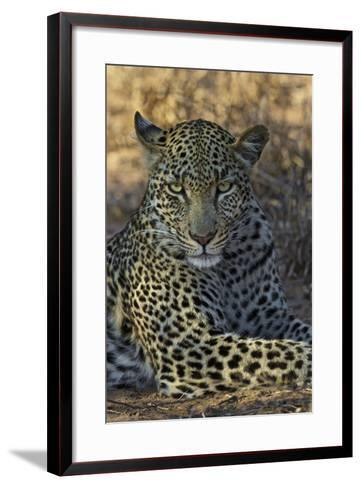 A Leopard Rests in South Africa's Timbavati Game Reserve-Steve Winter-Framed Art Print
