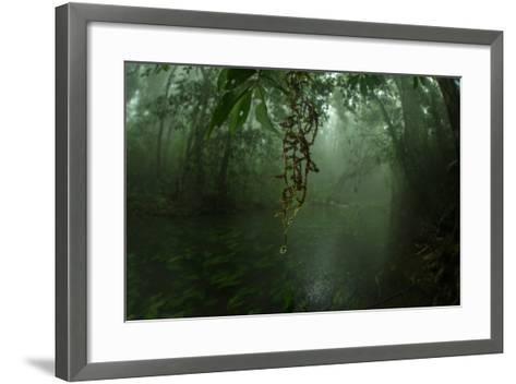 Water Drips Off Vines in a Rainforest-Prasenjeet Yadav-Framed Art Print