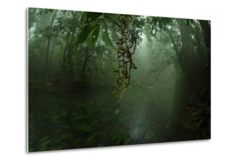 Water Drips Off Vines in a Rainforest-Prasenjeet Yadav-Metal Print