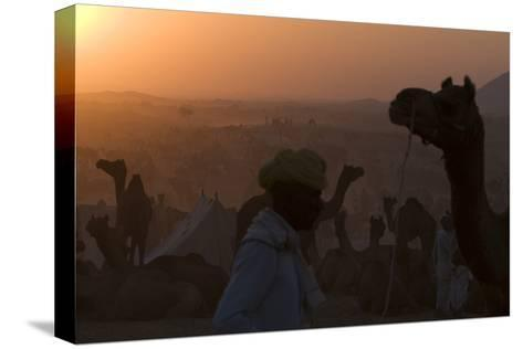 Silhouetted Dromedary Camels at Dusk at the Pushkar Camel Fair-Steve Winter-Stretched Canvas Print