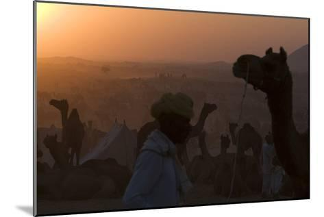 Silhouetted Dromedary Camels at Dusk at the Pushkar Camel Fair-Steve Winter-Mounted Photographic Print