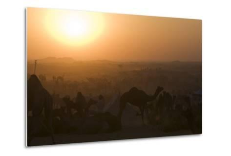 A Setting Sun and Silhouetted Camels at the Pushkar Camel Fair-Steve Winter-Metal Print