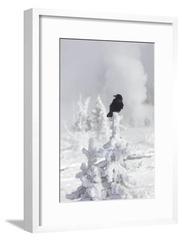 A Raven Sits Atop a Frost Covered Tree in Yellowstone-Robbie George-Framed Art Print