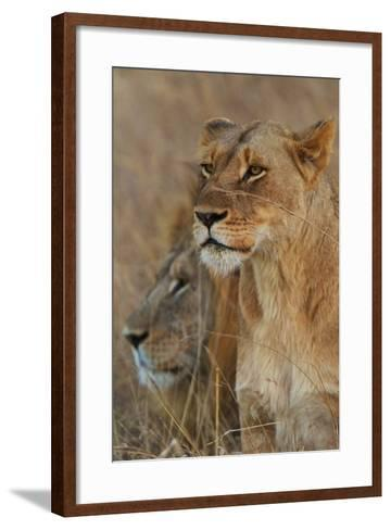 A Lion and Lioness Rest in the Grass at the Phinda Game Reserve-Steve Winter-Framed Art Print