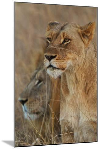 A Lion and Lioness Rest in the Grass at the Phinda Game Reserve-Steve Winter-Mounted Photographic Print