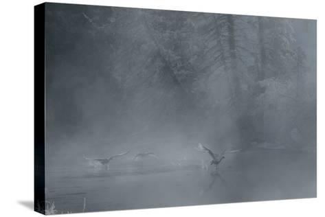 Birds Come in for a Landing on the Water's Surface-Charlie James-Stretched Canvas Print