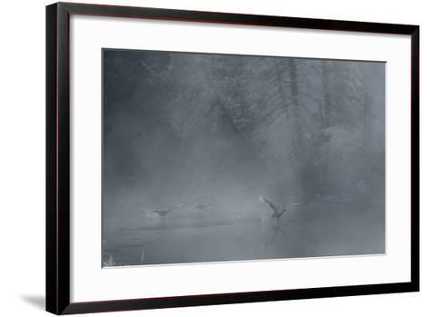 Birds Come in for a Landing on the Water's Surface-Charlie James-Framed Art Print