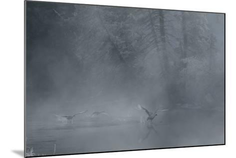 Birds Come in for a Landing on the Water's Surface-Charlie James-Mounted Photographic Print
