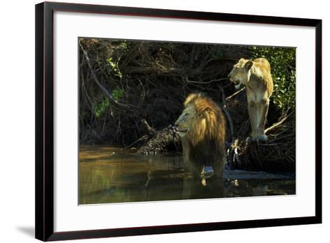 A Mating Pair of Lions at the River's Edge in South Africa's Sabi Sand Game Reserve-Steve Winter-Framed Art Print