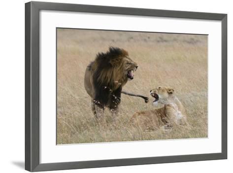 Lions, Panthera Leo, Masai Mara, Kenya-Sergio Pitamitz-Framed Art Print