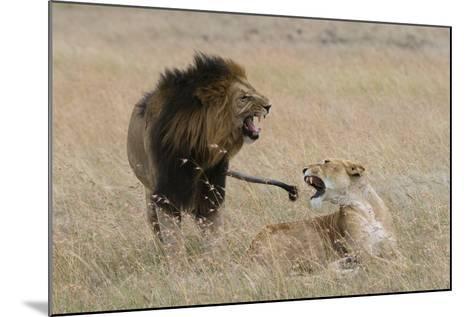 Lions, Panthera Leo, Masai Mara, Kenya-Sergio Pitamitz-Mounted Photographic Print