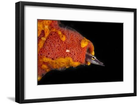 A Secretary Blenny Peers from the Safety of its Burrow Inside a Sponge-David Doubilet-Framed Art Print