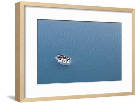 Seals, Phocidae, Sunbathing on an Iceberg in the Kenai Peninsula-Jill Schneider-Framed Art Print