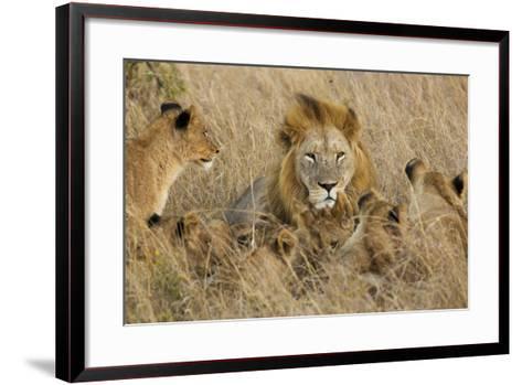 A Lion Pride Rests in the Grasslands of the Phinda Game Reserve-Steve Winter-Framed Art Print