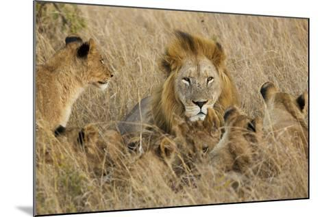 A Lion Pride Rests in the Grasslands of the Phinda Game Reserve-Steve Winter-Mounted Photographic Print