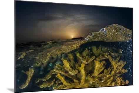 Submerged Endangered Elkhorn Coral in Garden of the Queen National Marine Park-David Doubilet-Mounted Photographic Print