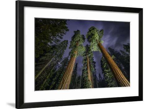 Giant Sequoia Trees in the Old Growth Forest of California's Sequoia National Park-Keith Ladzinski-Framed Art Print