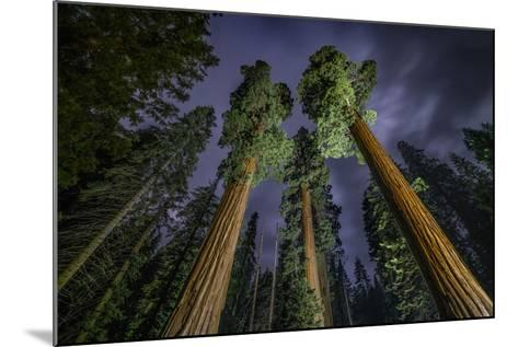 Giant Sequoia Trees in the Old Growth Forest of California's Sequoia National Park-Keith Ladzinski-Mounted Photographic Print