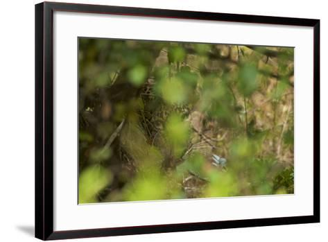 A Leopard Resting in Yala National Park-Steve Winter-Framed Art Print