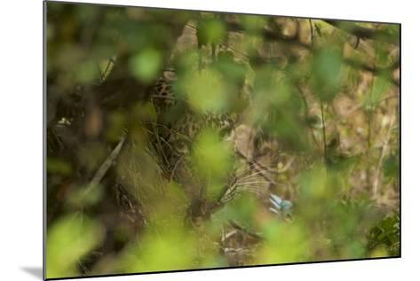 A Leopard Resting in Yala National Park-Steve Winter-Mounted Photographic Print