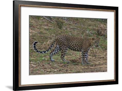 An Alert Leopard in Yala National Park-Steve Winter-Framed Art Print