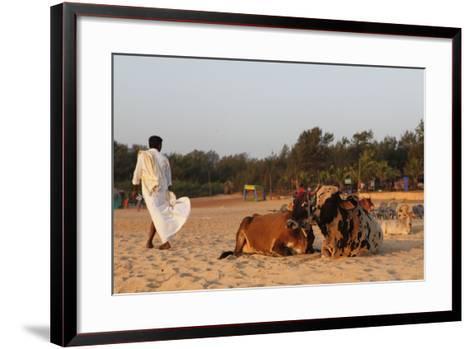 Two Cows, Bos Taurus, Resting on the Sand at Baga Beach-Jill Schneider-Framed Art Print