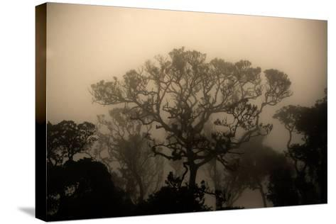 A Morning Mist in the Rainforest of Kerala-Prasenjeet Yadav-Stretched Canvas Print