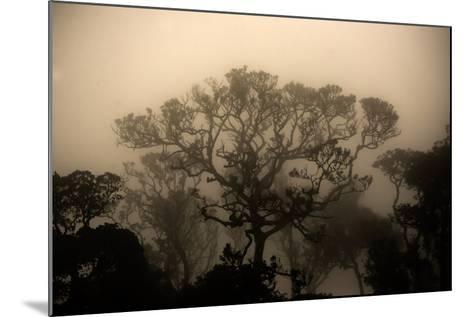 A Morning Mist in the Rainforest of Kerala-Prasenjeet Yadav-Mounted Photographic Print