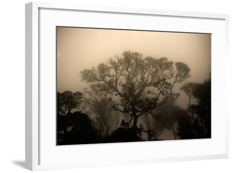 A Morning Mist in the Rainforest of Kerala-Prasenjeet Yadav-Framed Art Print