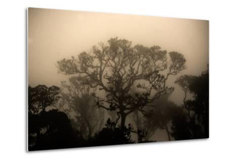 A Morning Mist in the Rainforest of Kerala-Prasenjeet Yadav-Metal Print
