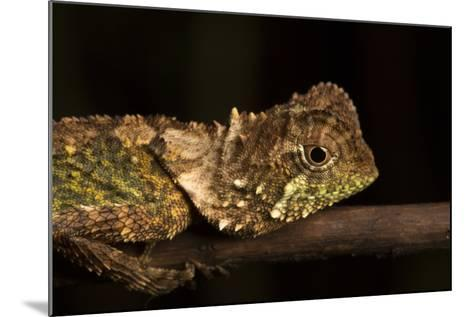 A Lizard Rests on a Tree Branch-Robin Moore-Mounted Photographic Print
