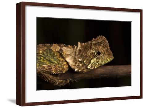 A Lizard Rests on a Tree Branch-Robin Moore-Framed Art Print