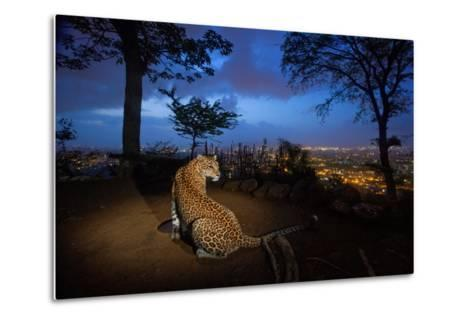 A Water Hole Attracts One of the Leopards Living around Sanjay Gandhi National Park-Steve Winter-Metal Print
