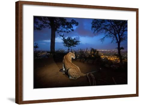 A Water Hole Attracts One of the Leopards Living around Sanjay Gandhi National Park-Steve Winter-Framed Art Print