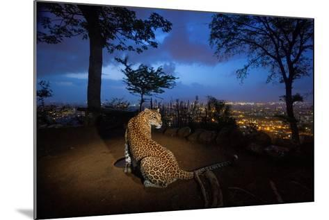A Water Hole Attracts One of the Leopards Living around Sanjay Gandhi National Park-Steve Winter-Mounted Photographic Print