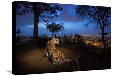 A Water Hole Attracts One of the Leopards Living around Sanjay Gandhi National Park-Steve Winter-Stretched Canvas Print